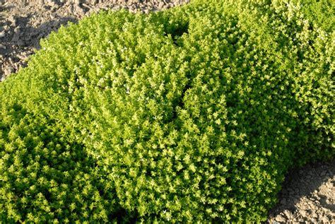 Exceptionnel Pot Pour Plante Aromatique Interieur #5: 51q4khpqt0ws08os0o8ckos4c-source-9229032.jpg