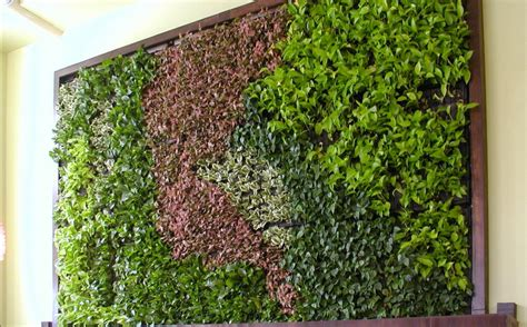 green wall green walls vertical planting system will create a