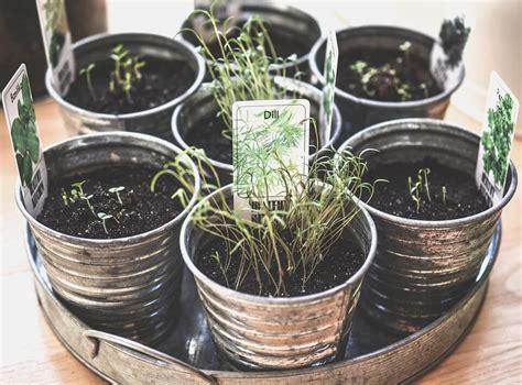 indoor herb garden kits reviews top picks urban