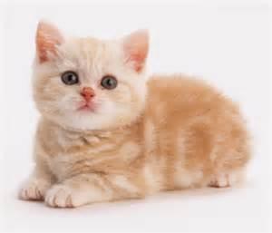 50 gambar dp bbm kucing lucu imut gemesin berbagai gadget