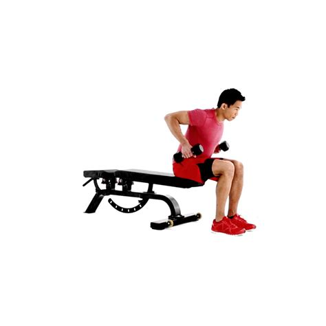 dumbbell rows without bench how to properly execute a seated dumbbell row muscle