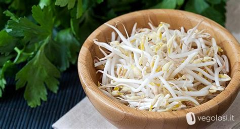 come cucinare i semi di soia germogli di soia come cucinarli propriet 224 consigli e