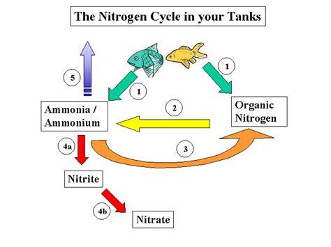 Nitrogen Cycle Worksheet by Nitrogen Cycle Diagram Worksheet Abitlikethis