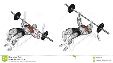 bench press steps exercising press of a bar lying on a bench with stock