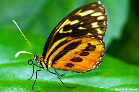 heat cutting down on butterflies food source kbia