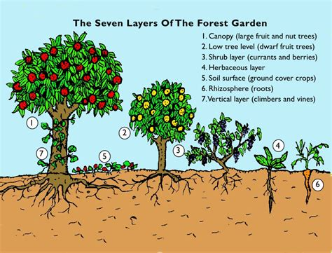 Vertical Gardening System - the step by step guide to creating your forest garden spiralseed