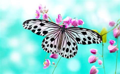 butterflies full hd wallpaper and background image lovely beautiful birds butterfly hd wallpapers photos