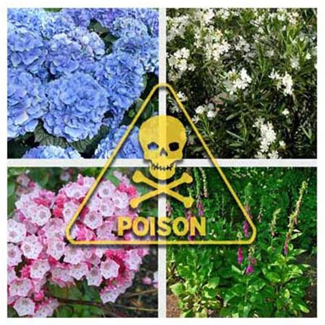 poisonous backyard plants backyard plants poisonous dogs 2017 2018 best cars reviews