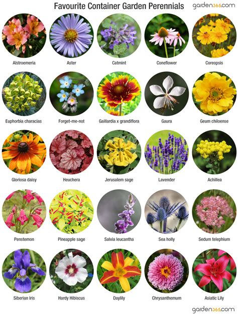 Growing perennials in containers garden365