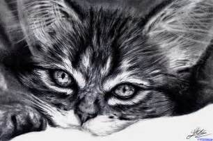how to draw a realistic kitten cute kitten step by step