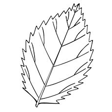 elm leaf coloring page top 20 free printable leaf coloring pages online leaves