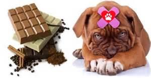 chocolate bad for dogs encore bulldogs encore bulldogs