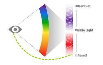 what part of the eye sees color the human eye can see invisible infrared light
