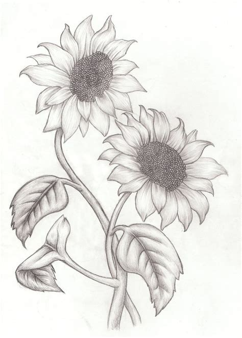 How To Draw Sunflowers In A Vase by 25 Best Ideas About Sunflower Drawing On
