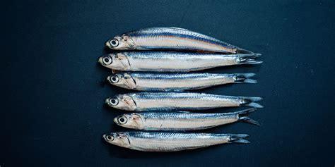 pesce azzurro come cucinarlo cos 232 e come cucinare il pesce azzurro