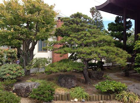 Pine Tree Gardens by Pine U S Japanese Gardens