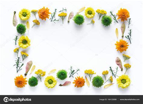 cornici fiori cornice con fiori colorati foto stock 169 metamorphosax