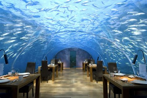 680 ithaa undersea restaurant alifu best free home ithaa undersea restaurant wesley brandon best free