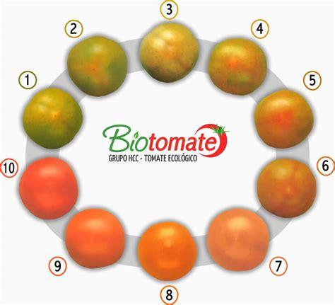color tomato products bio tomato organically grown tomato
