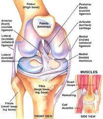 Interior Knee Ligament A Review Of Acl Injuries And Methods Of Recovery Cssmart