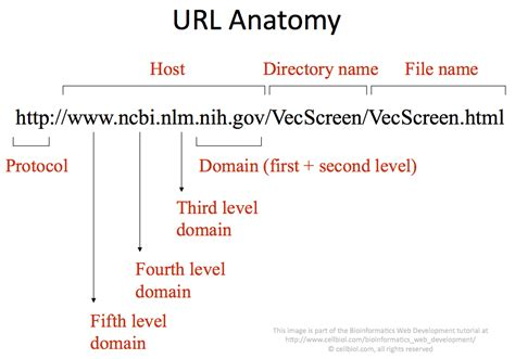 host url 3 1 hosts domains and urls bioinformatics web development