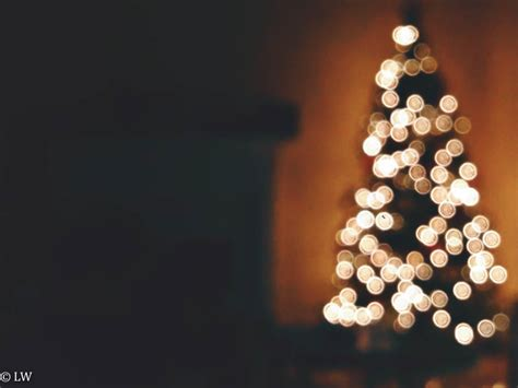 how to photograph a tree with lights how to photograph light bokeh with your iphone