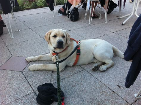 restaurants that allow dogs team run smart tips for dining out with your
