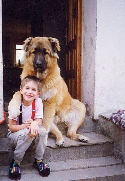 Russian mountain shepherd caucasian shepherd
