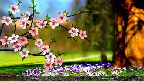 Flower High Definition Wallpaper Free Download   Page 30