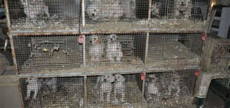 puppy mill vs breeder what are backyard breeders 28 images what are backyard breeders 28 images puppy