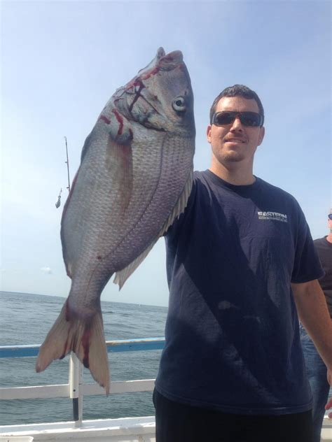 party boat fishing charters in ct sunbeamfleet home page