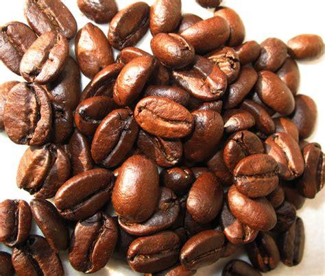 Kopi Coffee Bean kopi luwak wikiwand