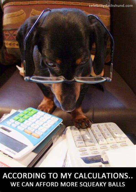 Accountant Dog Meme - since i have already killed nearly all of the squeakers in