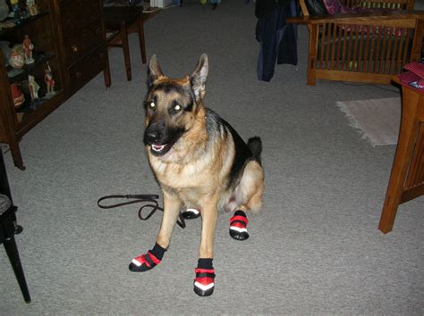 booties for dogs walking in boots in my run muttluk booties cool dogrunblog