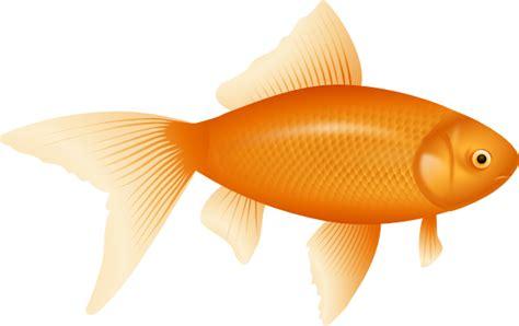 Goldfish Clip At Clker Vector Clip