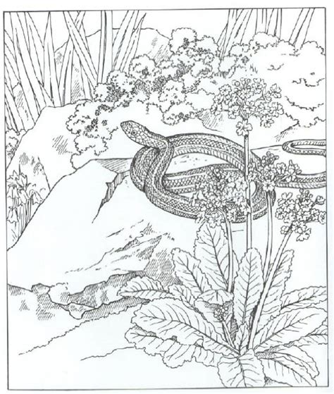 b sw coloring pages