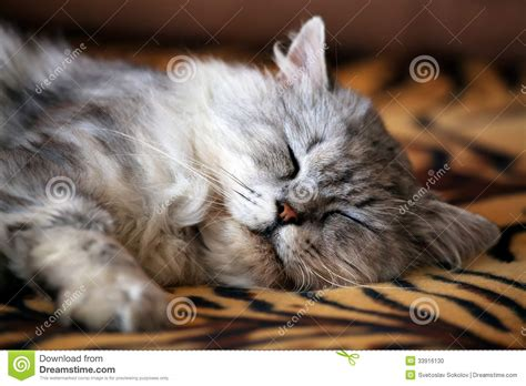 cat on sofa cat on sofa stock photo image 33916130