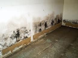 mold mildew are gross mold on drywall mold and mildew