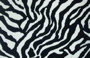 zebra print funny animals