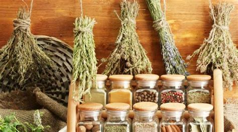 ancient root herbs boost total immunity  resistance