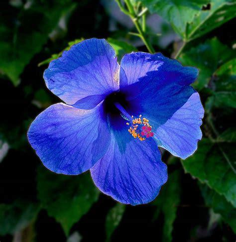 keindahan ciptaan allah kerajaan allah  langit   bumi