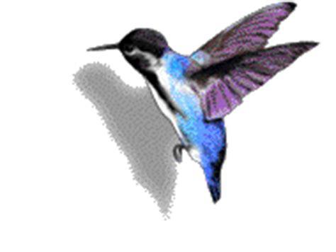 cara membuat gif bergerak perawatan burung murai batu membuat burung cepat mabung