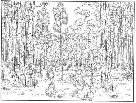 forest coloring pages free forest trees coloring pages