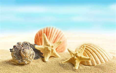 seashells starfishes sand marine shells sand hd wallpaper