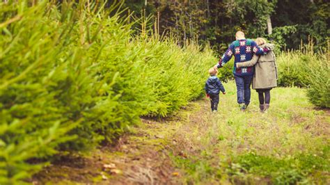 100 christmas tree farm lincoln ne northeast new
