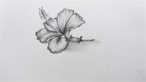 how to sketch how to sketch hibiscus flower