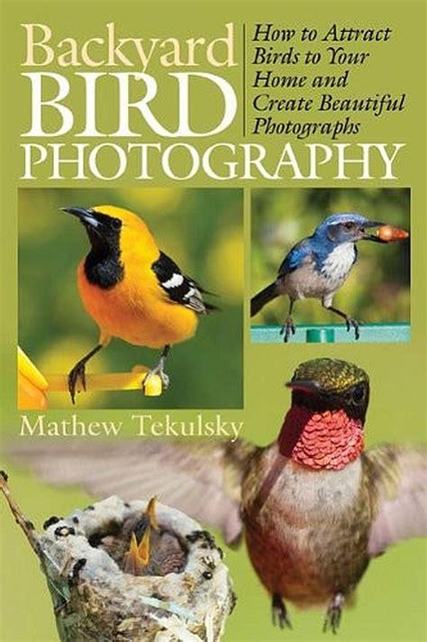 backyard bird photography backyard bird photography