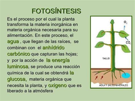 fotosintesis de las plantas fotos 237 ntesis alimentacion de las plantas buscar con