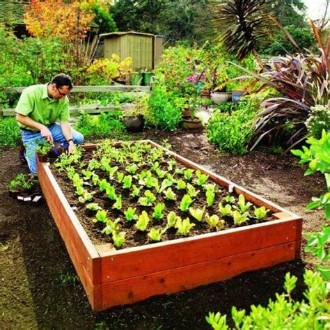 Raised Bed Soil Mix Vegetable Garden 20 Best Backyard Projects Sfgate