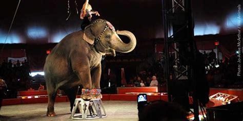 Circus Elephant Rage Animals Animals Australia Unleashed